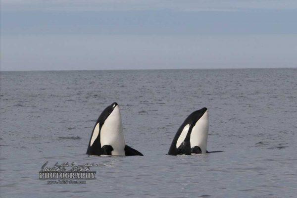 orca-double-spy-hop-best-240517-WM